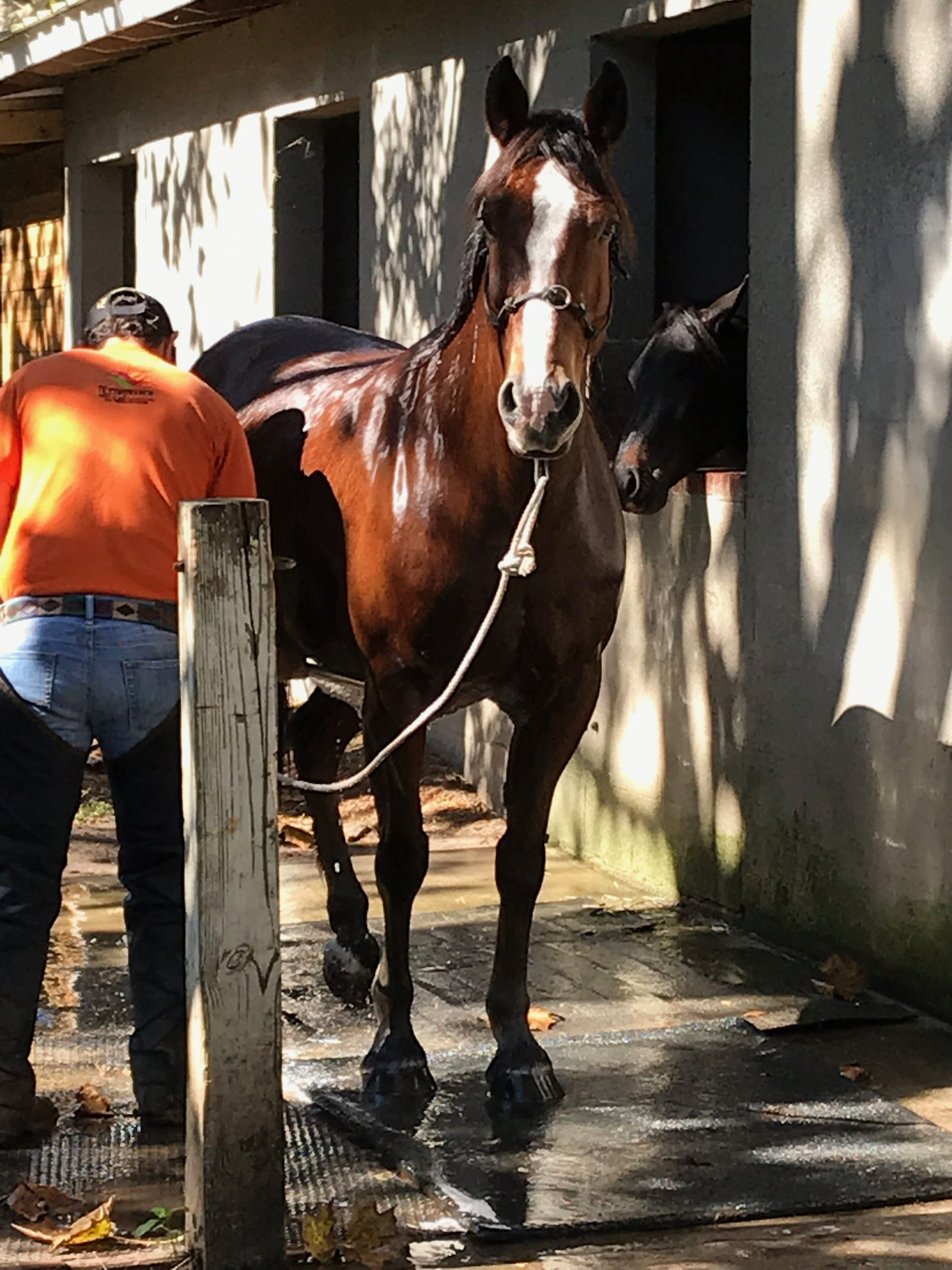 Cathy and Arturo   Horses, Animals