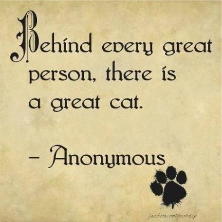 behind every great person is a great cat