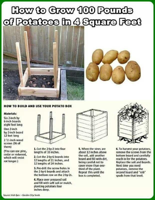 Pin By Sydeburnze Kevin Satx On Gardening Potato Gardening Homesteading Diy Projects Potato Box