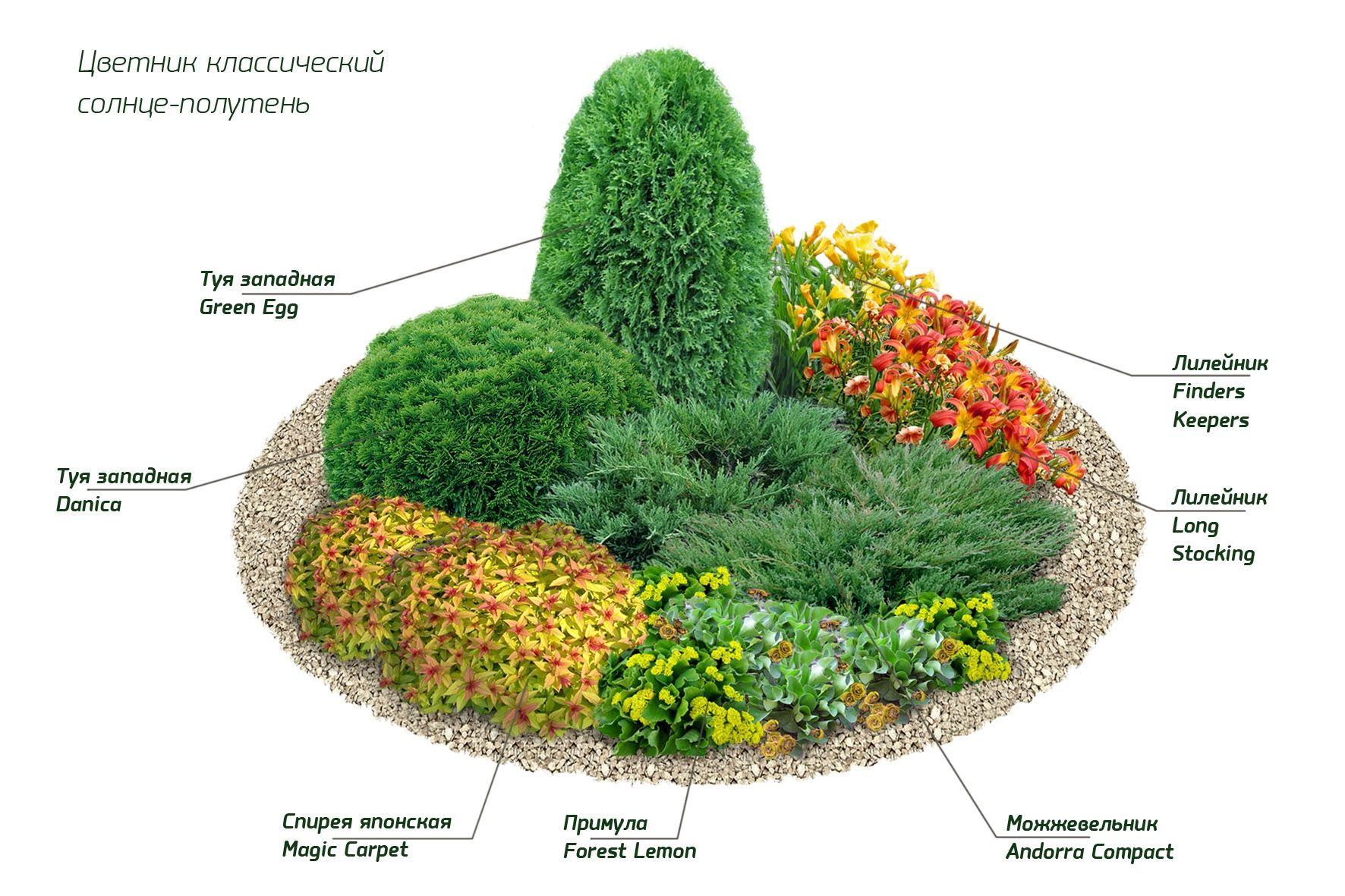 клумбы с описанием растений