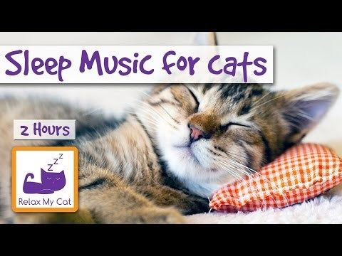 Relax Your Cat This Weekend With 2 Hours Of Sleep Music For Cats