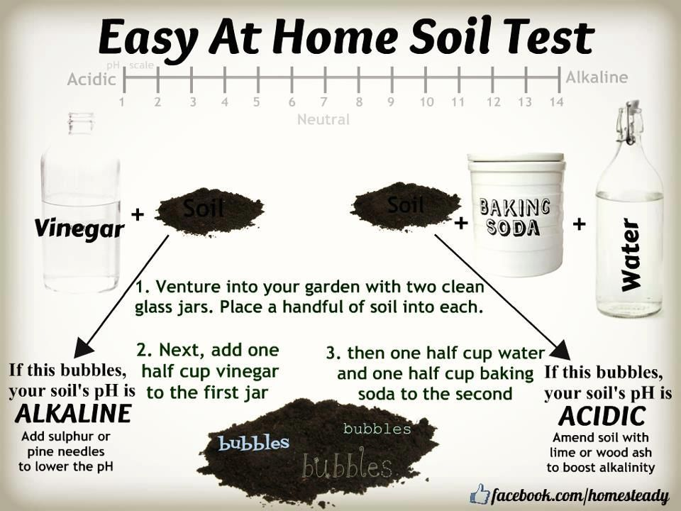 Superb A Simple Home Soil Test