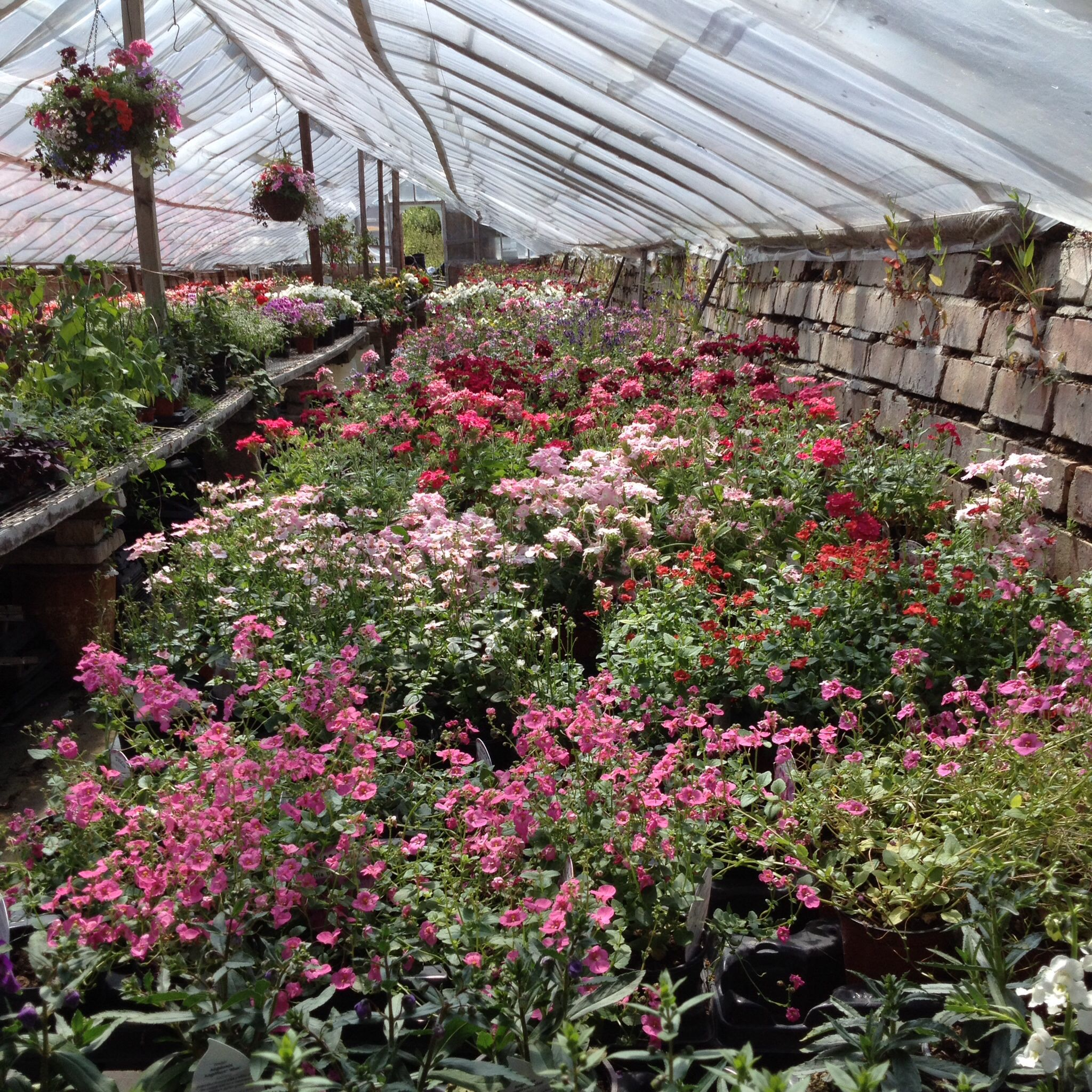 Cottage Garden Ping At Foxley Road Nurseries