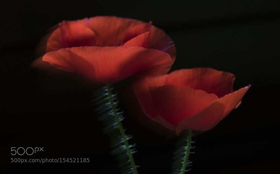 Red passion by csa2003. @go4fotos