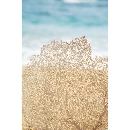 Hawaii Oahu Turquoise Ocean With Beautiful Coral Element On The Sand Canvas Art - Brandon Tabiolo Design Pics (22 x 34)