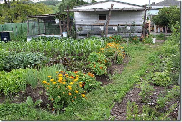 Urban Garden Demonstration Update New Zealand details