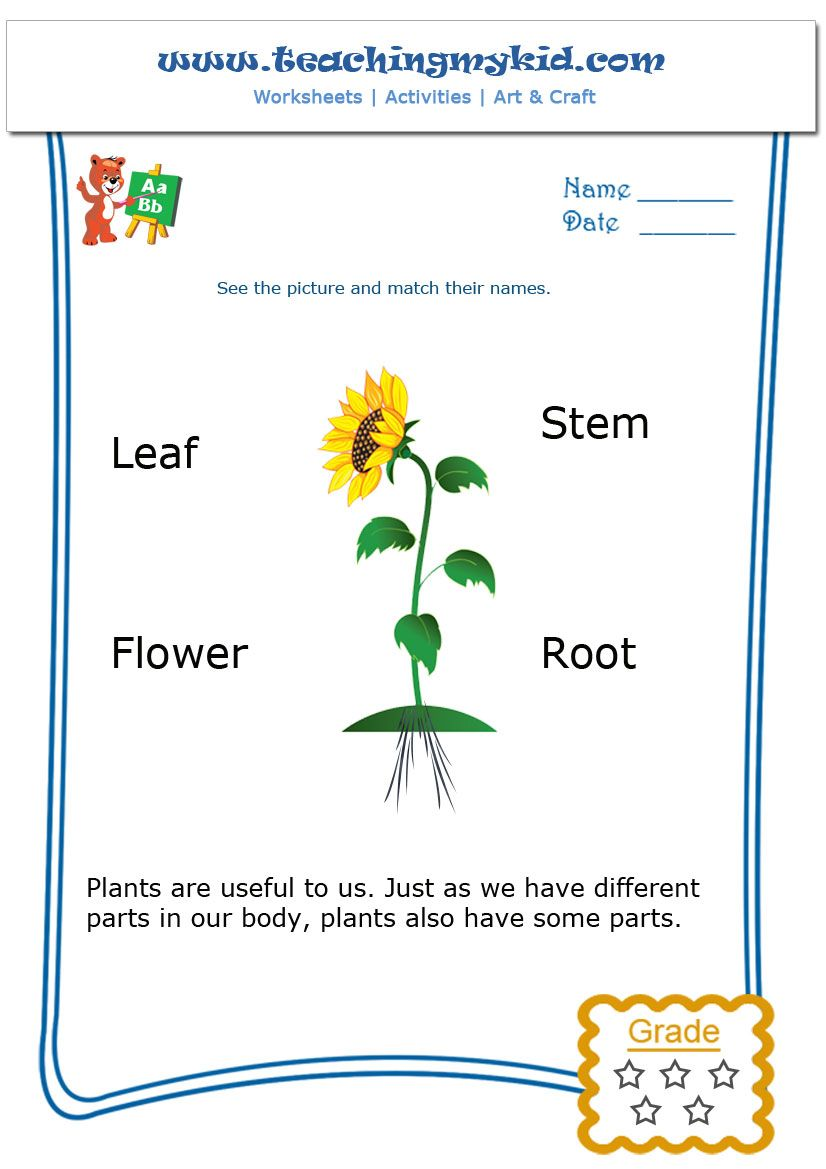 Worksheets Parts Of A Plant Worksheet parts of a plant teachingmykid com pinterest worksheets plant