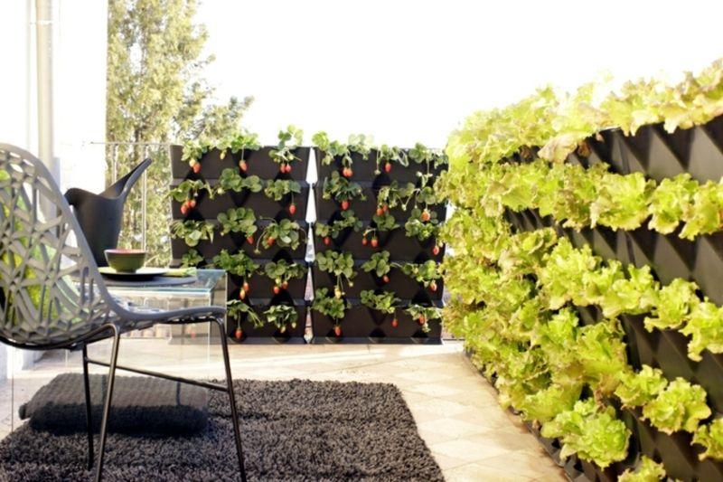 gem se anbauen auf dem balkon welche sorten eignen sich am besten daf r vertikaler garten. Black Bedroom Furniture Sets. Home Design Ideas