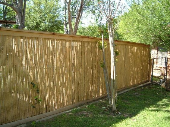 Cheap Privacy Fencing Ideas Dog Fence Options For Backyard