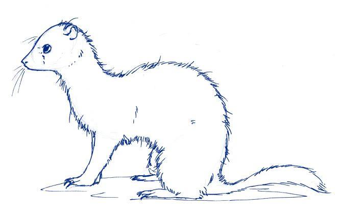 resultado de imagen de ferret yin yang