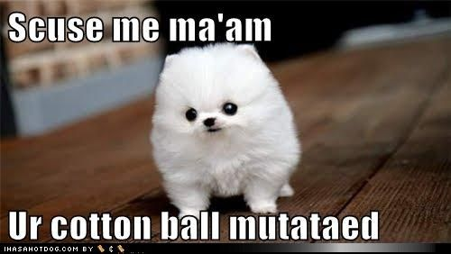 funny dog pictures - Scuse me ma'am  Ur cotton ball mutataed