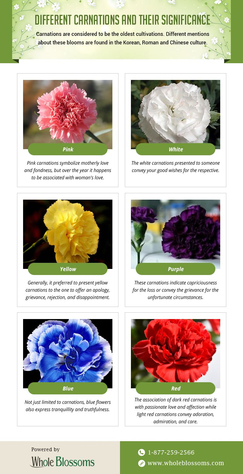 This Infographic Delivers Relevant Information About The Carnations Flowers Carnation Flower Is The Beautiful Var Carnation Flower Flowers For Sale Carnations