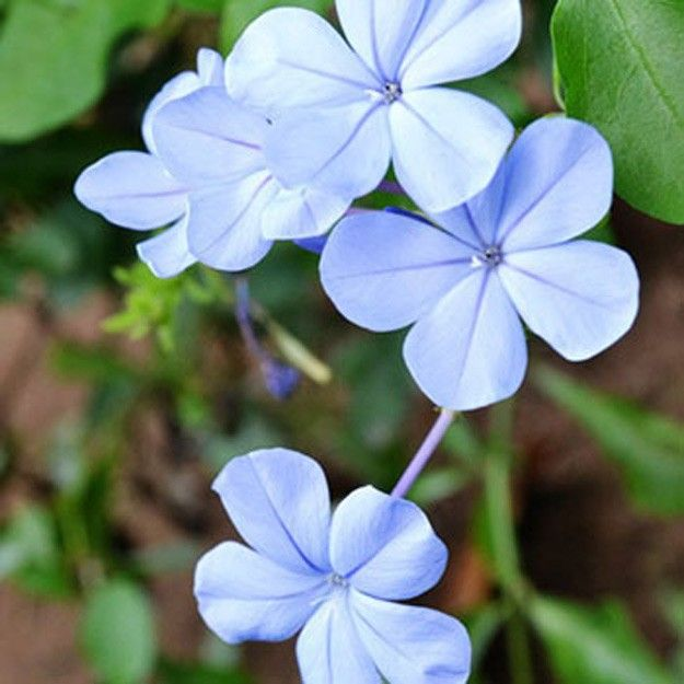 types of flowers   types of flowers a-z   common types of flowers ...