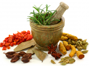 The Naturopathic View of the human life