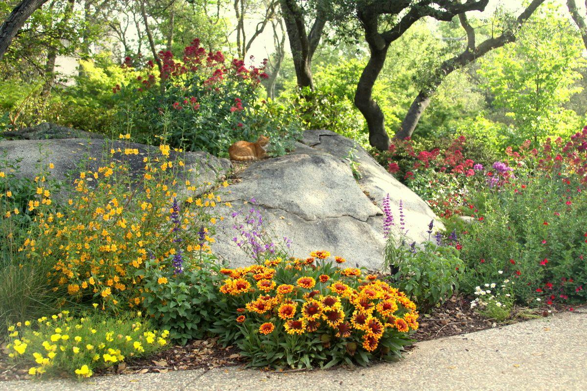 Pictures Of Draught Resistant Plants Drought Tolerant 400 x 300