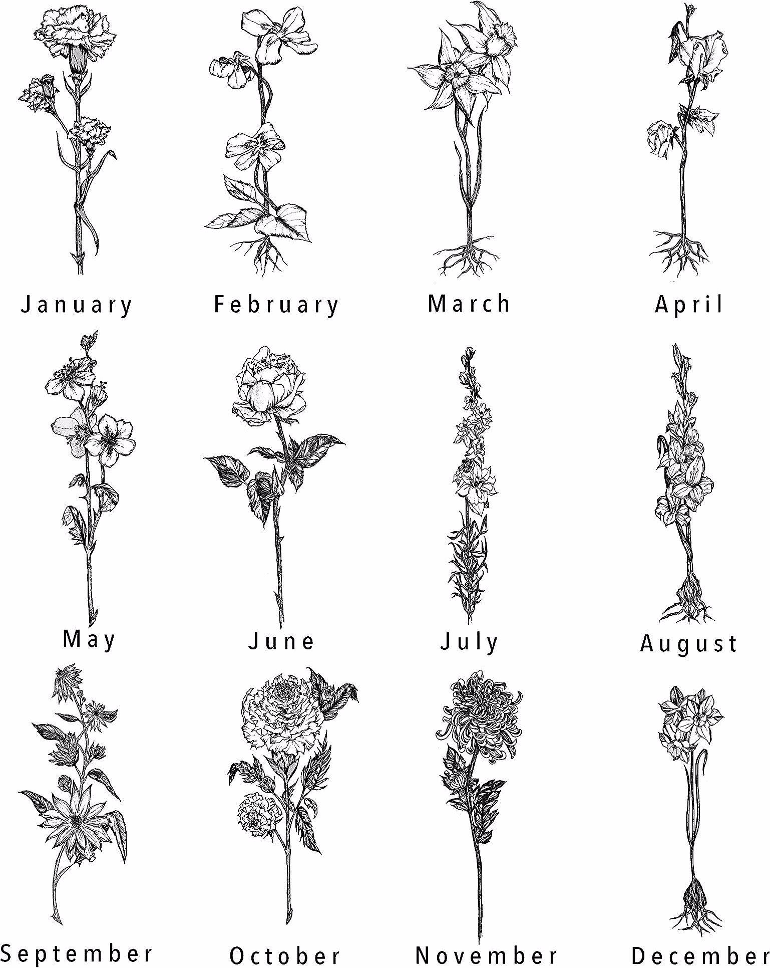 Birth Flower Tattoo Hand Drawn Birth Flower Tattoos 1 Jan U2022 U00a0carnation 2 Feb U2022 Violet 3 Birth Flower Tattoos Flower Tattoo Hand Larkspur Tattoo