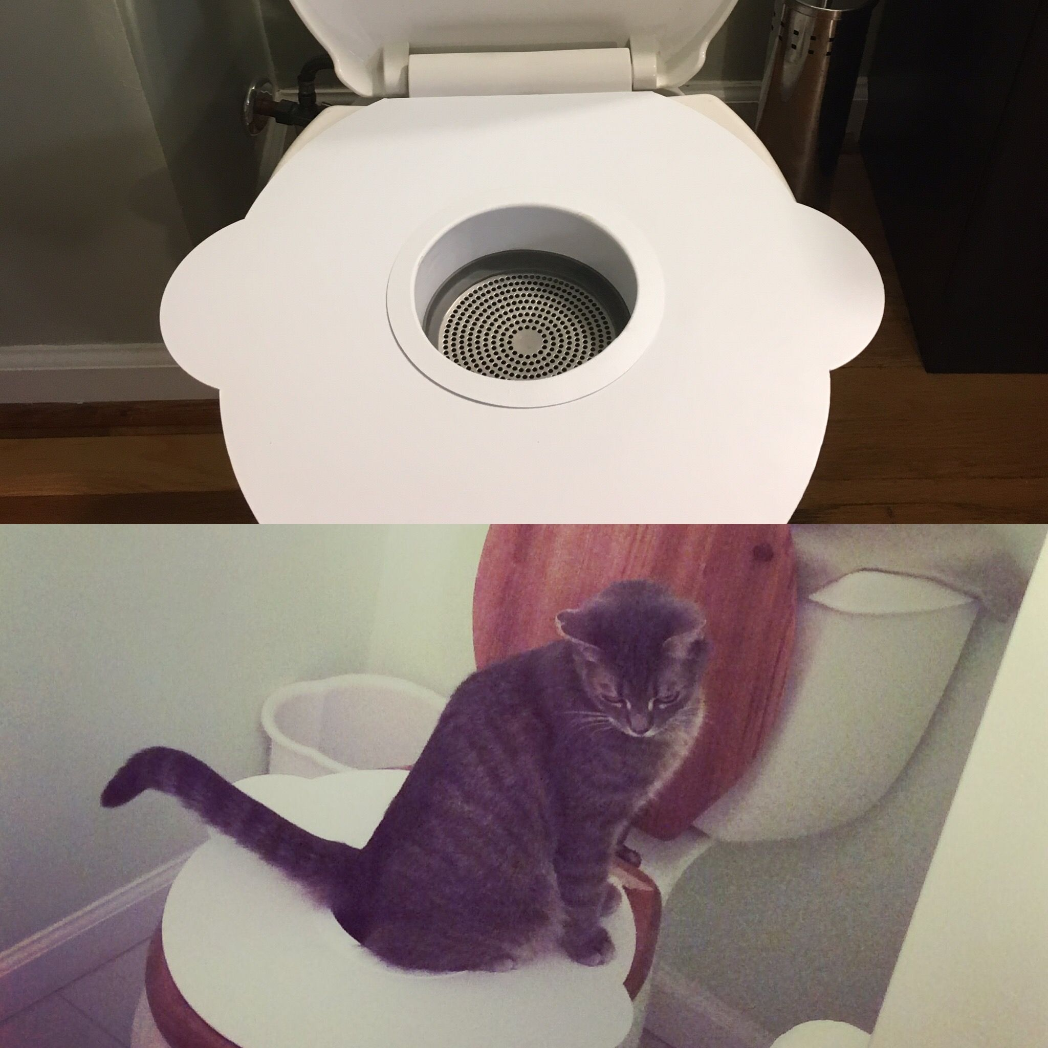 Kitty\'s Loo purrfectly designed for your cats natural instincts ...