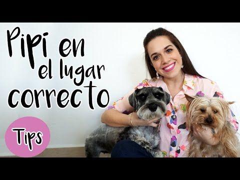 Como Enseñar A Un Perro A Hacer Sus Necesidades En Un Solo Lugar Jose Arca Veterinario Online Entrenamiento Perros Repelente Para Perros Baño Para Perros