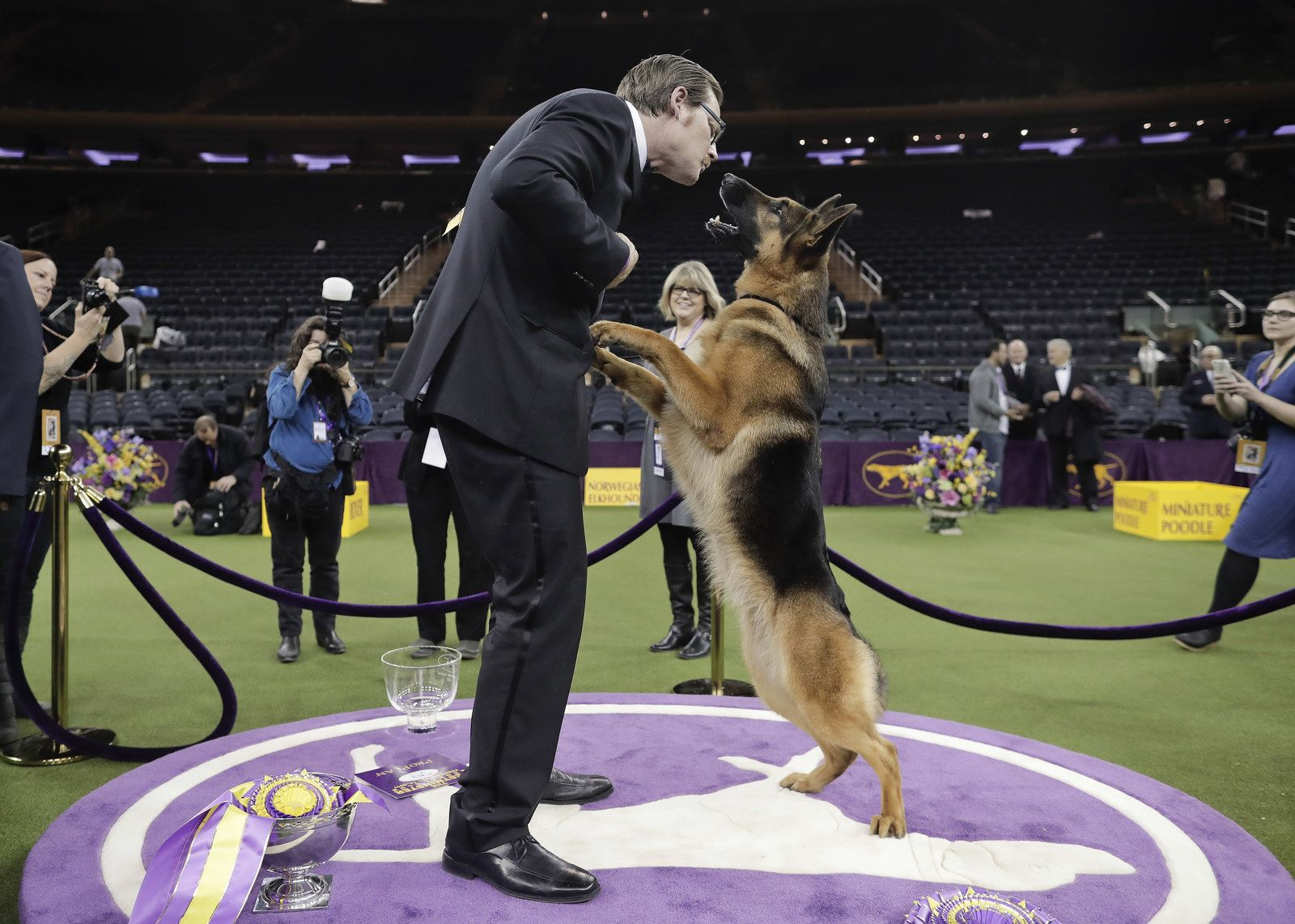 Rumor The German Shepherd Returns To Win Best In Show At Westminster Westminster Dog Show Dog Show Dogs