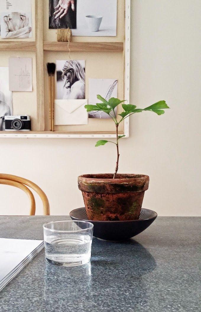 Stil Inspiration Ginkgo Pflanze Inomhusvaxt Vaxt Inredning Plantera Blommor