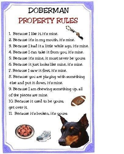 Doberman Property Rules Magnet Very Funny By Tedwards52 On Etsy