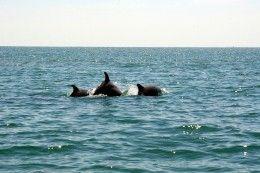 Dolphin Tour In Myrtle Beach