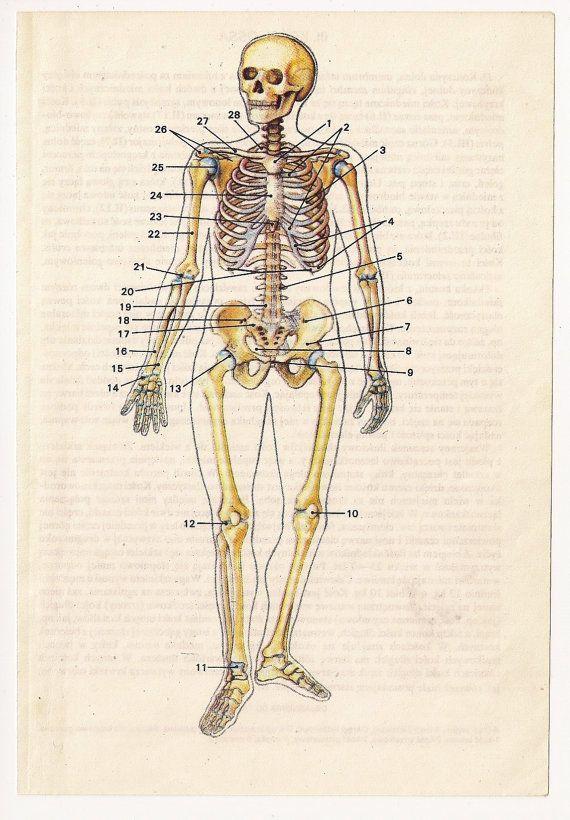 2 Vintage Anatomical Prints, Medical Diagrams skull skeleton Book ...