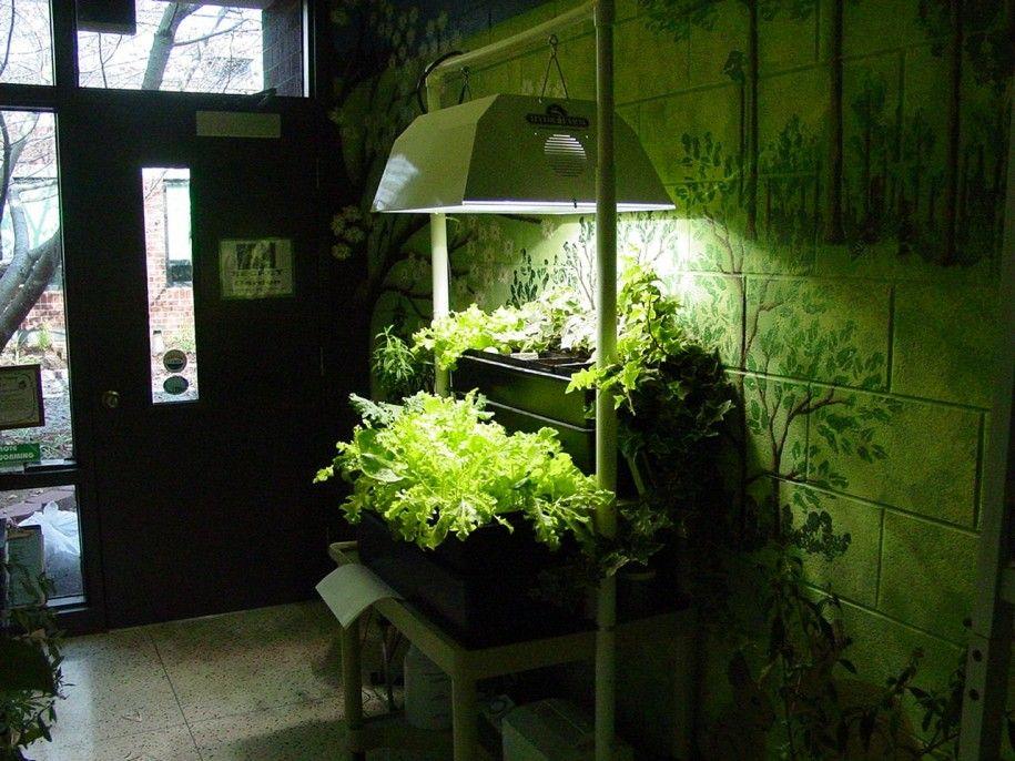 Astonishing Modern House Plants. Wonderful Decorative Plants for Living Room  Astonishing Indor Mini Gardening With Lighting Setup Ideas Modern