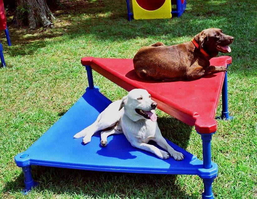 Climb and Sit Dog Training Platform Dog Park Agility