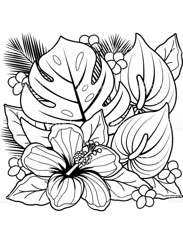 Flower Coloring Pages Hd. Below is a collection of