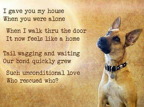 I Gave You My Home When You Were Alone Who Rescued Who Author