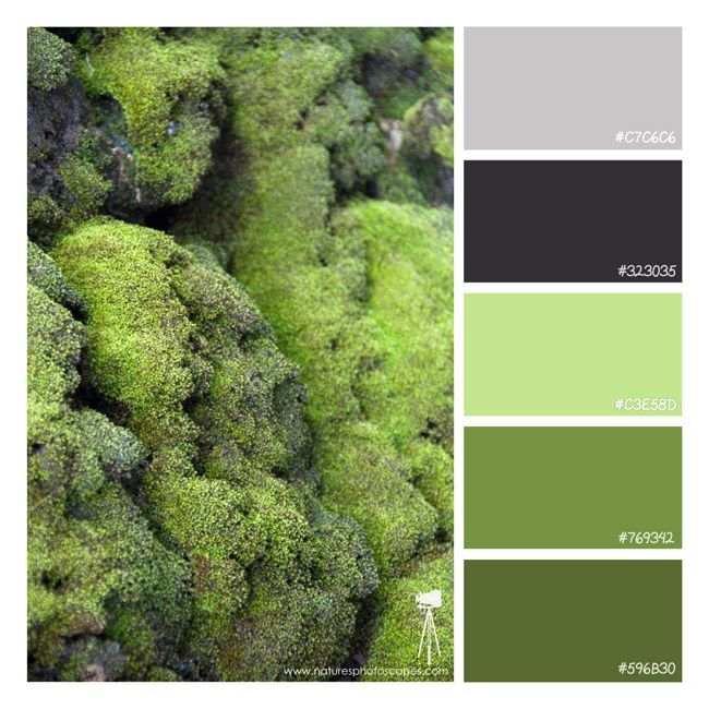 Colorful Rooms Moss: Moss Clinging To The Side Of A Rock Bridge. #green, #moss