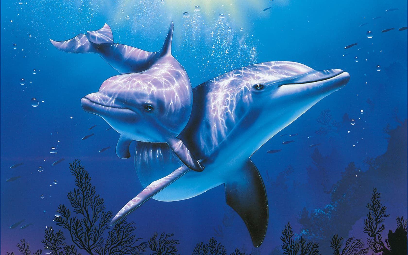mơ thấy cá heo đánh con gì