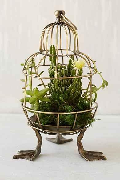 Plum & Bow Birdcage Terrarium