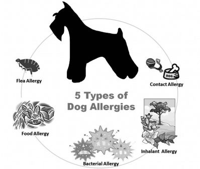 Our 2 Cents On Dog Allergies Twocentstuesdays Dog Allergy