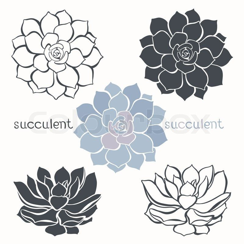 Cactus Flower Line Drawing : Succulent line drawing google search flowers favors