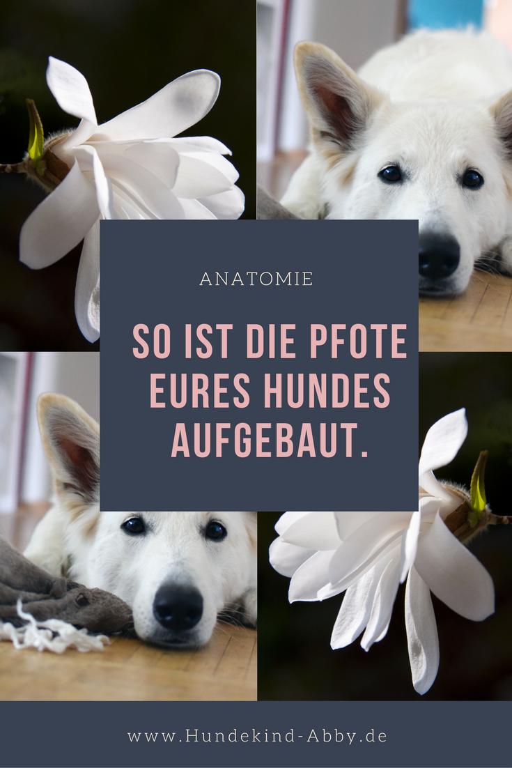 Nett Anatomie Eines Weiblichen Hund Bilder - Menschliche Anatomie ...