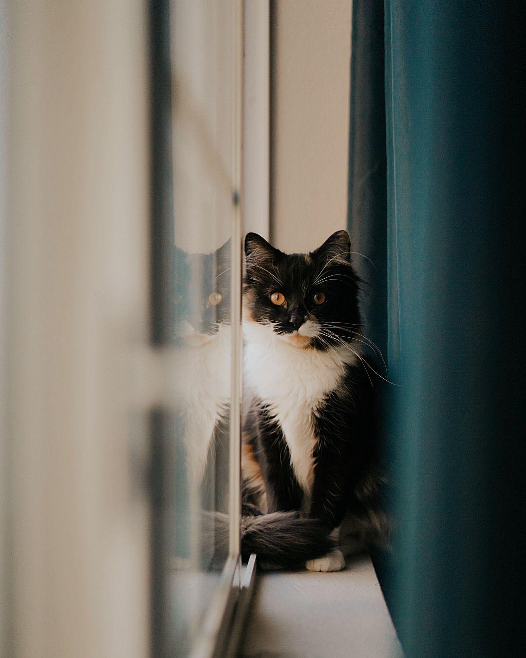 Cat / Kitty / Sushi / Meow / Window