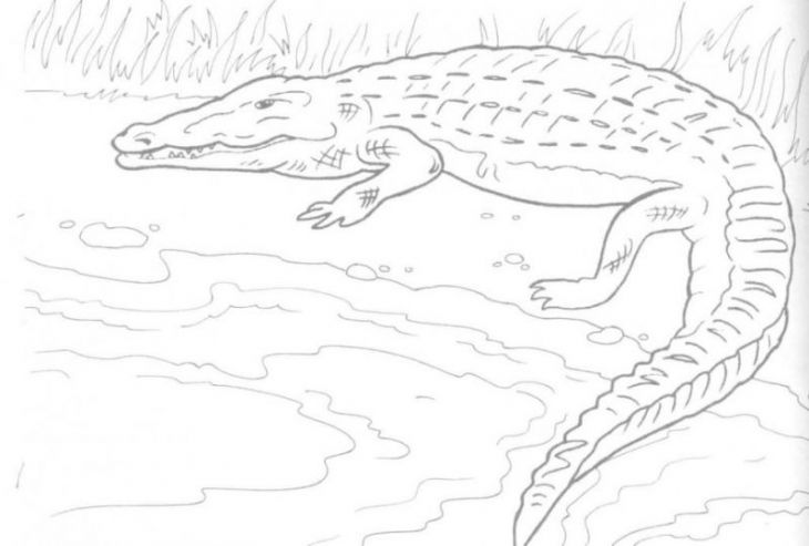 Difficult coloring page of a crocodile for adults | Animal Coloring ...
