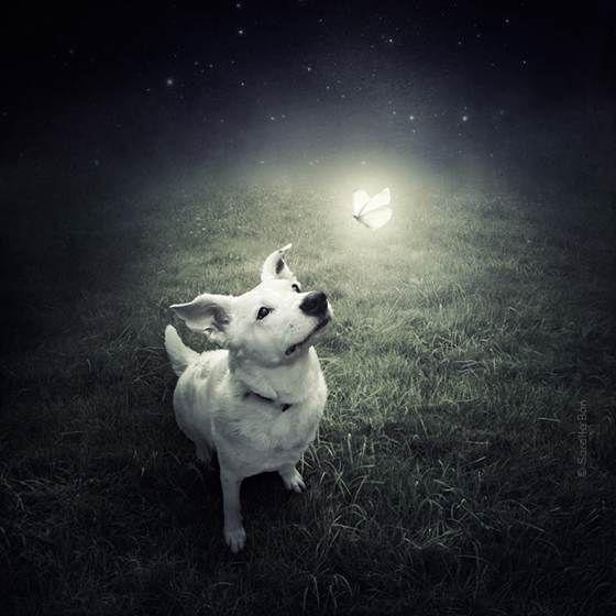 Animal Loving Photographer Creates Surreal Art To Save Shelter Pets Dog Photography Animals Dog Pictures