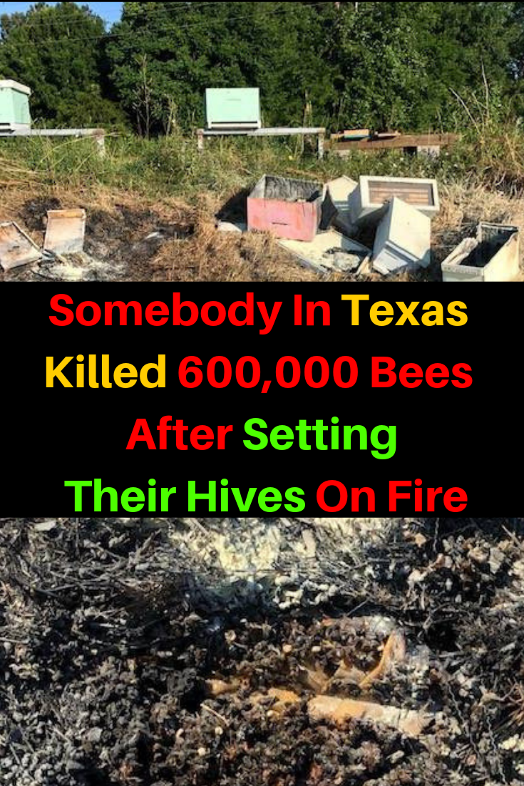 600,000 Bees Burned Alive In Fire Set By Unknown Texas