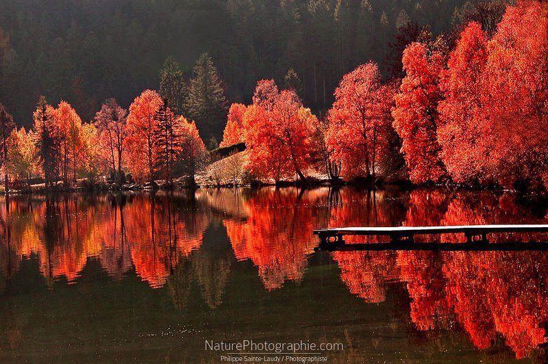 Arvores vermelhas refletidas