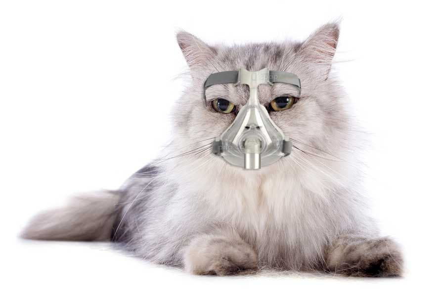 10 Animals with Sleep Apnea Easy Breathe Animals