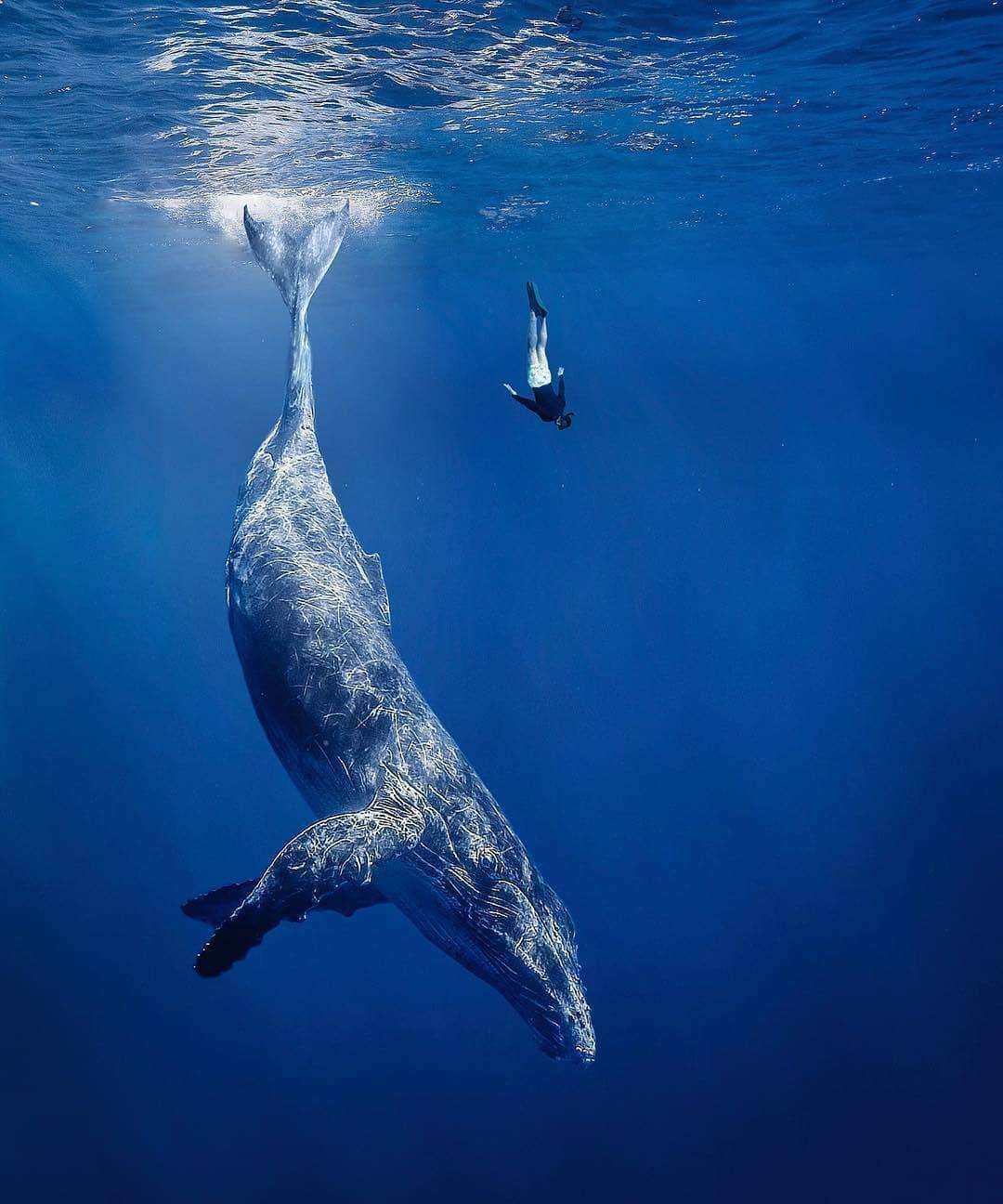самое большое животное в океане фото фото