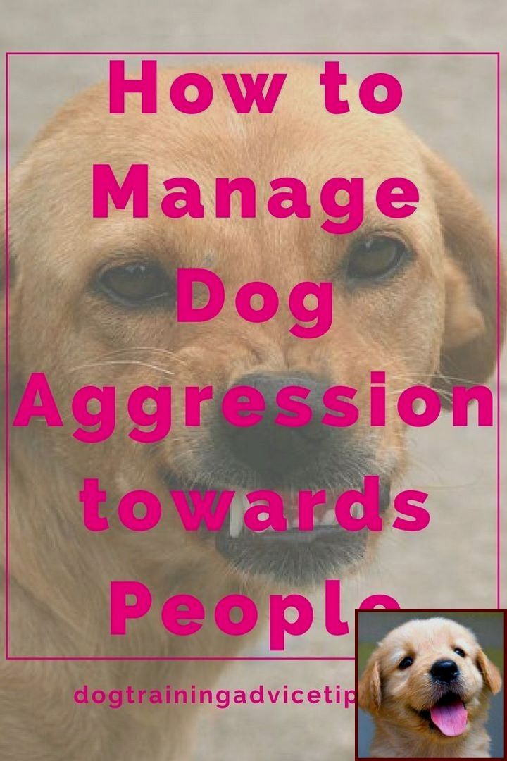 1 Have Dog Behavior Problems Learn About Dog Behavior Near Me And