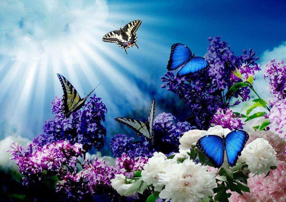 Best Scenery Of Butterfly Beautiful Butterflies Butterfly Wallpaper Butterfly
