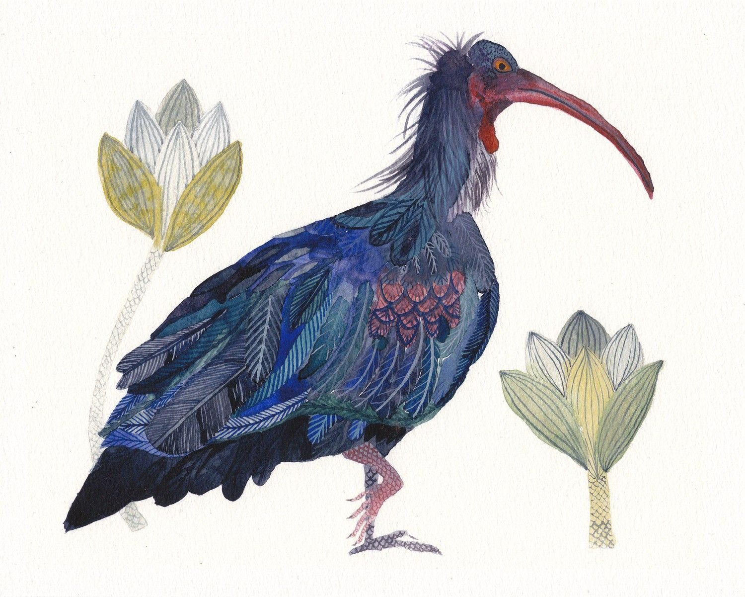 Bald Ibis by Michelle Morin. Watercolour http://www.aqnb.com/2011/01/03/image-five-whales-stacked/