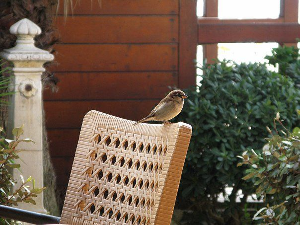 Joseph the sparrow