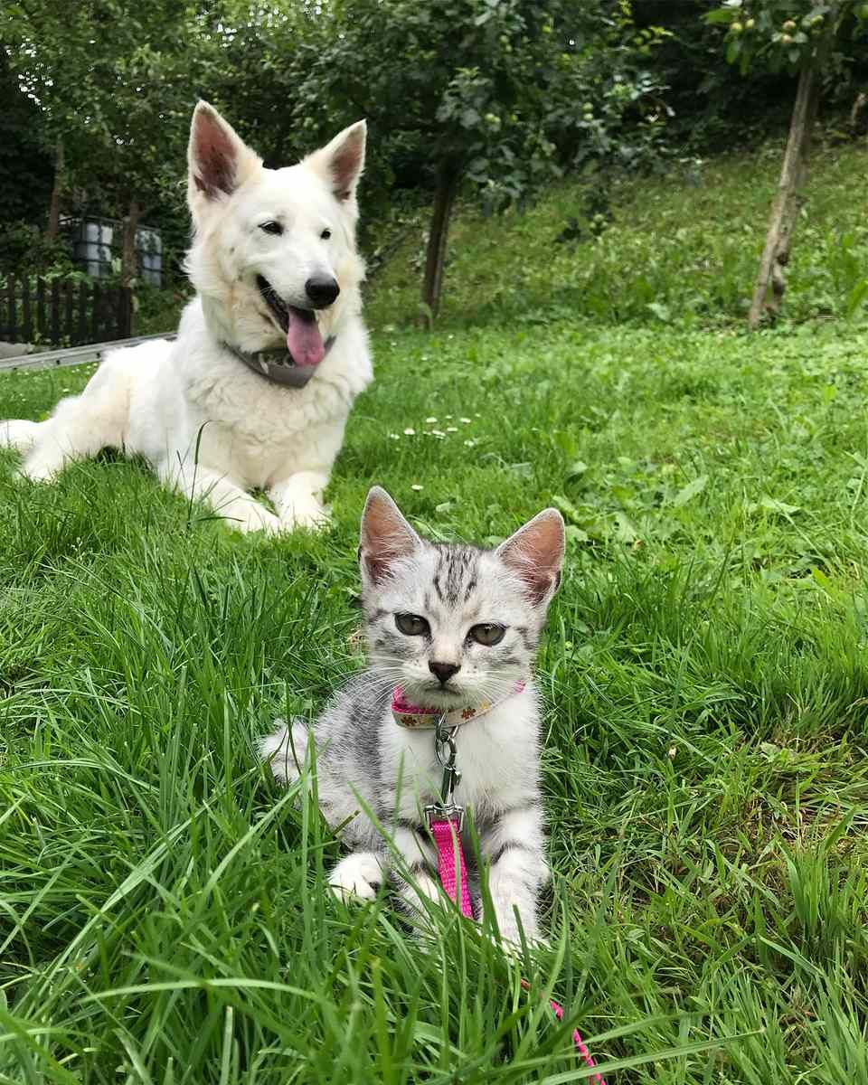 10 Reasons Why Cats Make Better Pets Than Dogs Pets, Cat