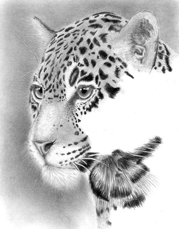 Where to watch the leopard...WIP2 by Anastasya-Murashova.deviantart.com on @deviantART